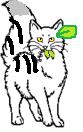 File:Brightheart Medicinecat.png