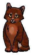 Ольхолап (котёнок)