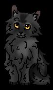 Крутобок (котёнок)