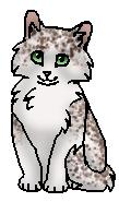 Галечница (котёнок)