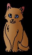 Хворостинка (котёнок)