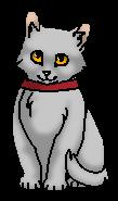 Рубинка.котёнок