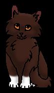 Белолапик (котёнок)
