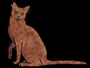 Пестролап (звёздный предок)