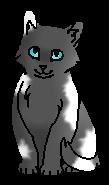 Голубок (котёнок)