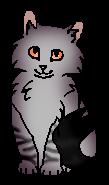 Камышик (котёнок)