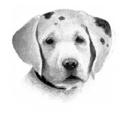 Собака Секреты племён англ