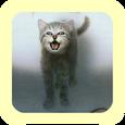 Котёнок слайдер