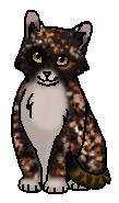 Пеструшка (котёнок)