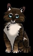 Мшинка (котёнок)