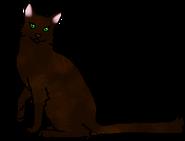Темношёрстка (звёздный предок)