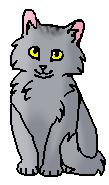 Шалун (котёнок)