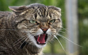 Бродячий кот