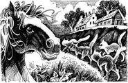 Лошадь Полночь