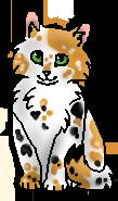 Пятнышко (котёнок)