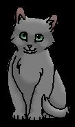 Туманка (котёнок)