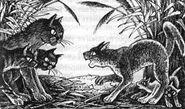 Меднохвостка с котятами Обещание Метеора Западня