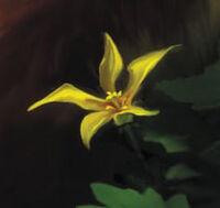 Сверкающая Звезда цветок