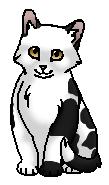Фиалочка (котёнок)