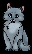 Кузнечик (котёнок)