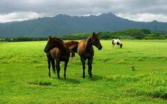 Animals Horses Horses on pasture 024002