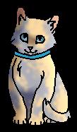 Лоскуток (котёнок)