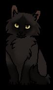 Черныш (котёнок)