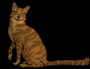 Криволапа (звёздный предок)