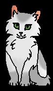 Волнолапка (котёнок)