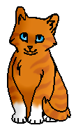 Куничка (котёнок)