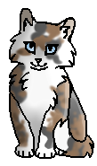 Маковинка (котёнок)