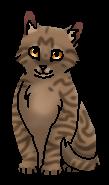 Берёзовик (котёнок)