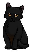 Паучишка (котёнок)