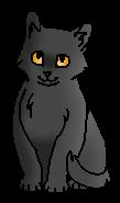 Совиный Глаз (котёнок)