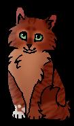 Белочка (котёнок)