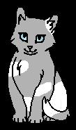 Дождинка (котёнок)