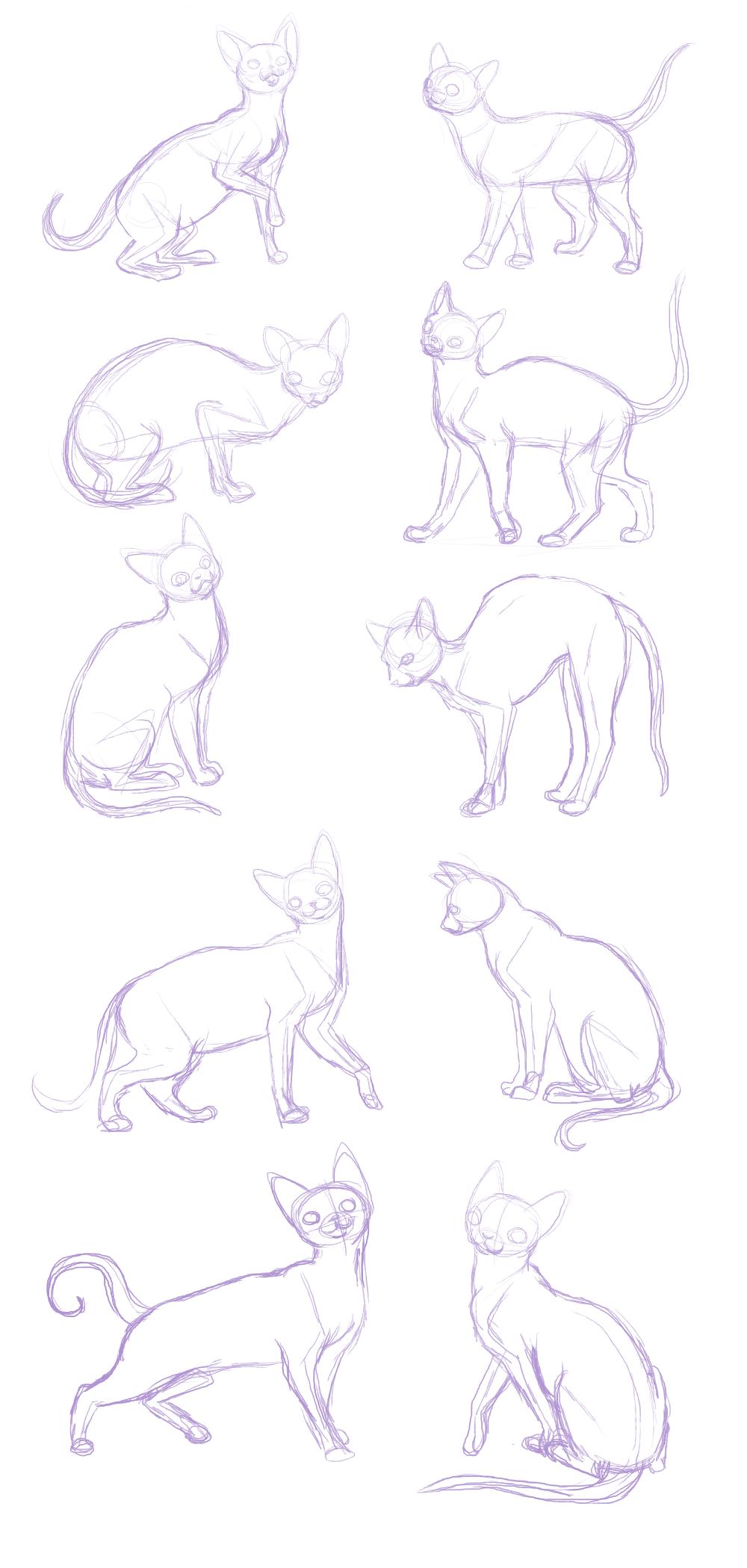 Cat Sketches Anatomy Practice By Bakamichi D368ocag