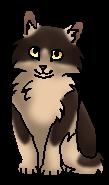 Кротик 4ц (котёнок)