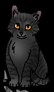 Тенёчек (Тень Когтегрива) (котёнок)