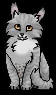 Пятнистый (котёнок)