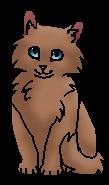 Меднохвостка (котёнок)