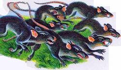 Крысы Секреты племён