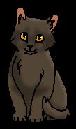 Орешек (котёнок)