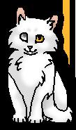 Беляночка (котёнок)