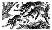 Лисы гонятся за Воробьишкой Знак трёх