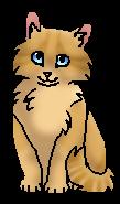 Корешочек (котёнок)