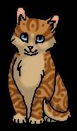 Терновник (котёнок)
