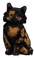 Изюминка (котенок)