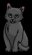 Капелька (котёнок)