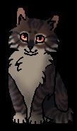 Когтишка (котёнок)